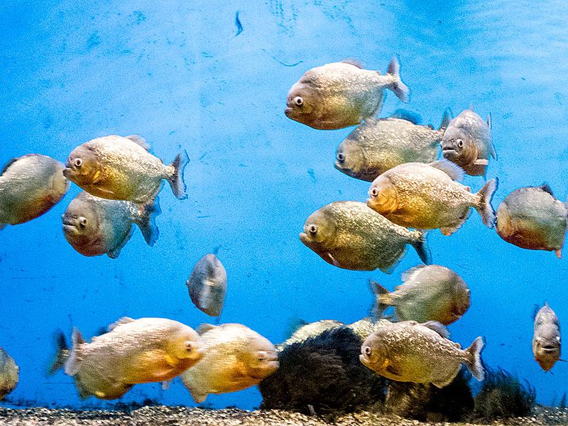 サンピアザ水族館